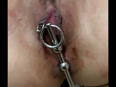 Daily training of female dogs